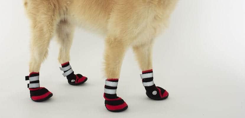 Perro con botas.
