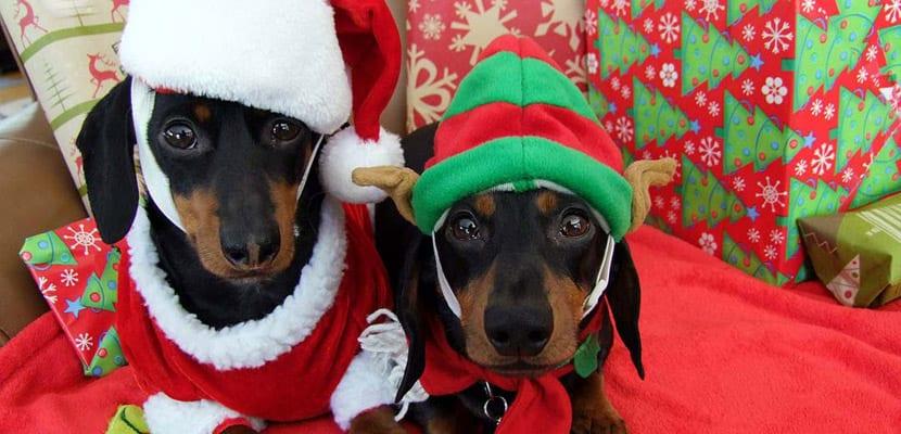 Alimentos de Navidad para perros