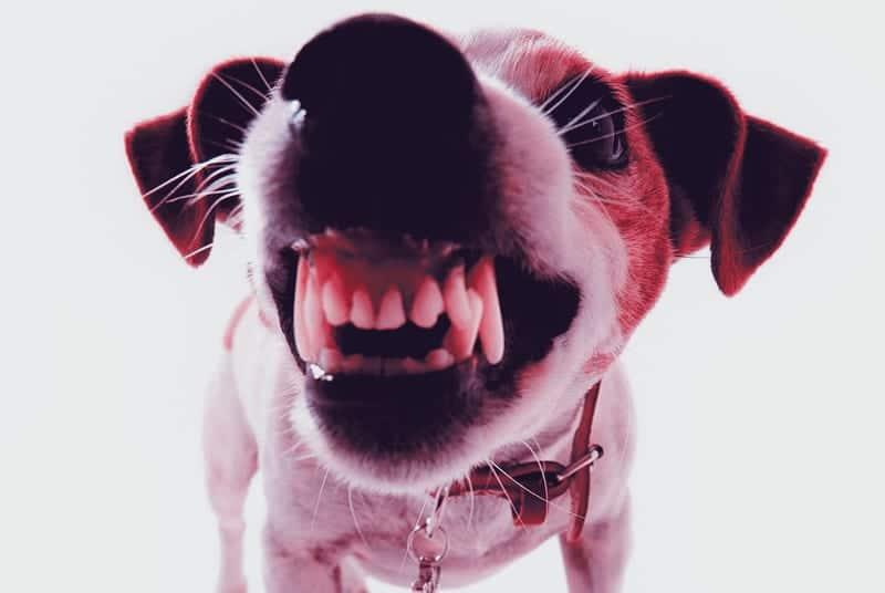 Que-hacer-si-mi-cachorro-me-empieza-a-morder-3