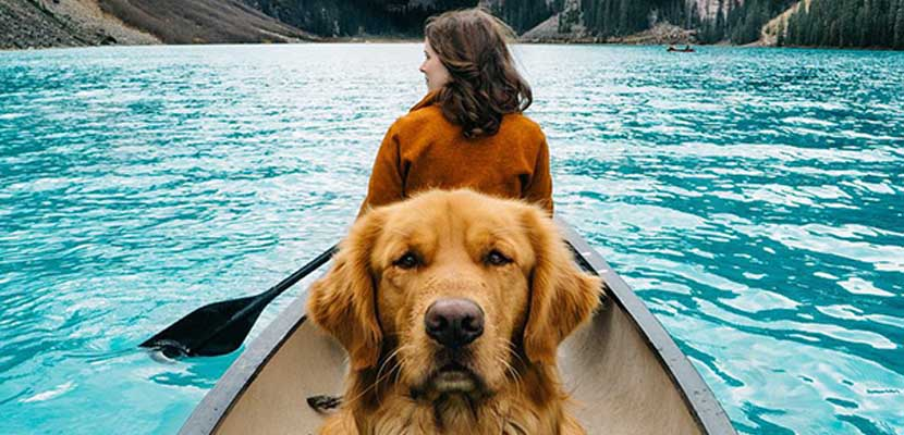 Golden Retriever viaja en canoa