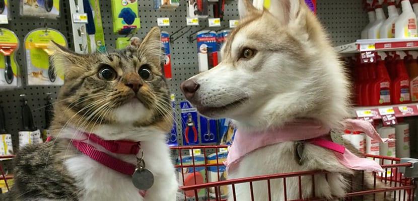 Rosie con Lilo en el super