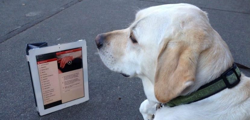 Las mejores apps sobre perros