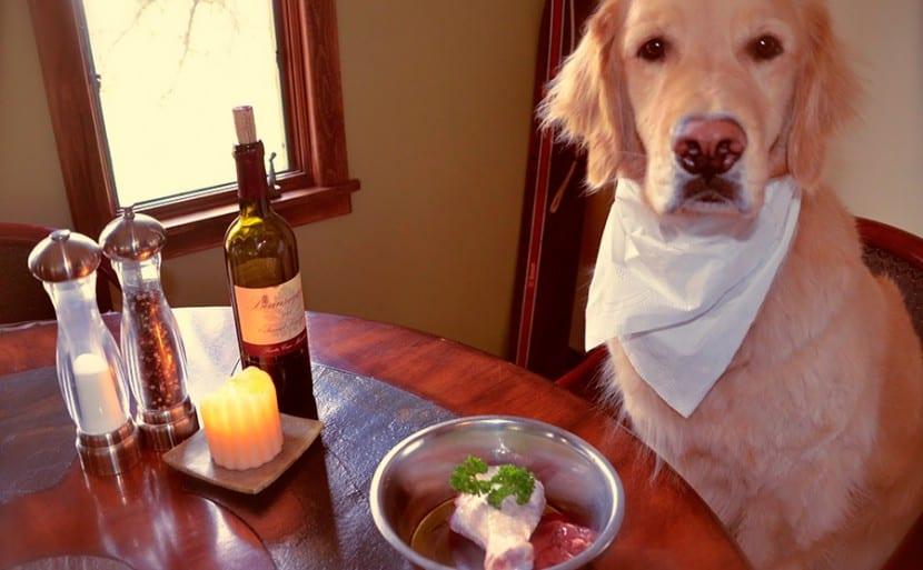 Dietas-para-problemas-de-piel-en-el-perro5
