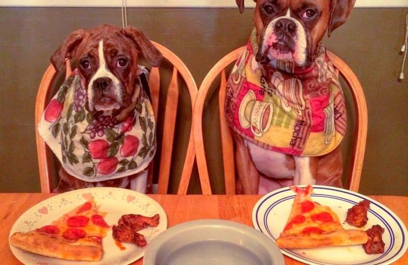 Dietas-para-problemas-de-piel-en-el-perro6