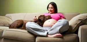 Perro junto a una mujer embarazada.
