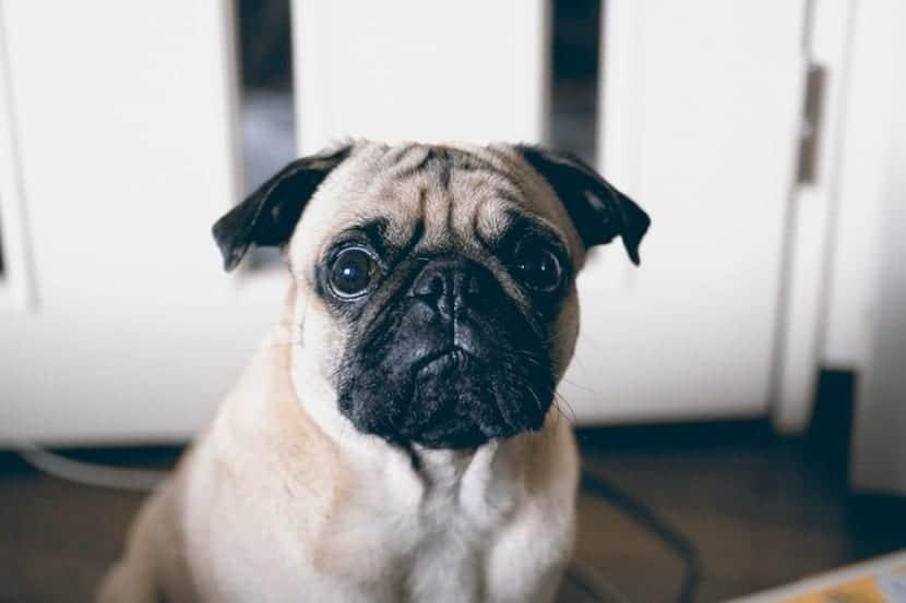 Entiende-mi-perro-lo-que-significan-las-palabras-Si-y-No