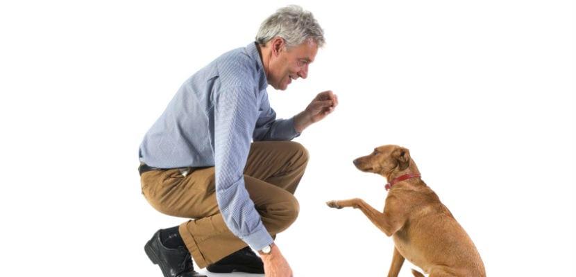 Hombre enseñándole órdenes a un perro.