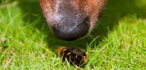 Perro acercándose a una oruga.