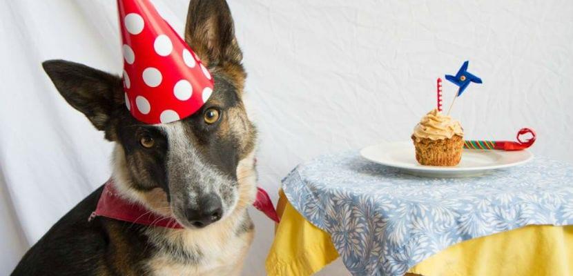 Perro junto a un pastel.