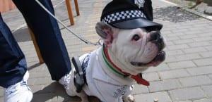 Disfraces de Carnaval para perros