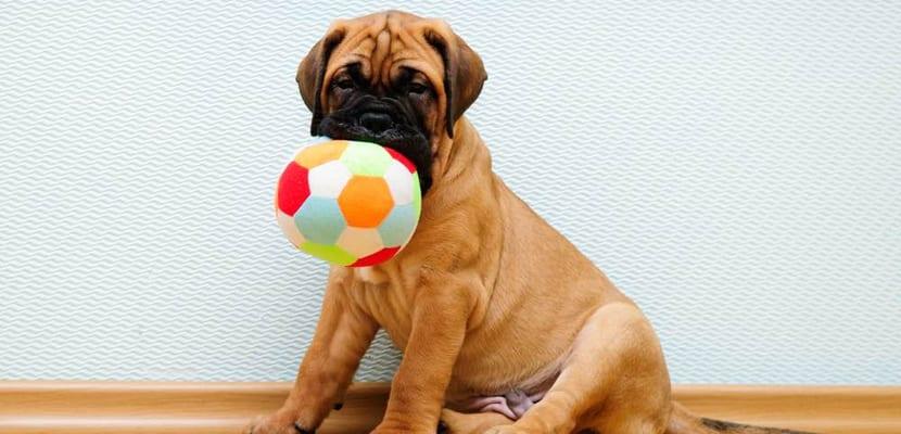Juegos para perros dentro de casa