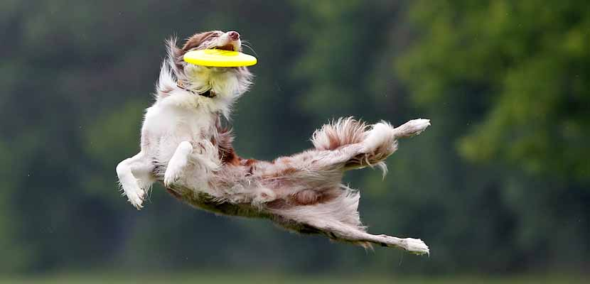 Jugar al frisbee