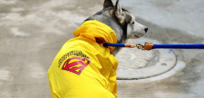 Pasear con el perro bajo la lluvia