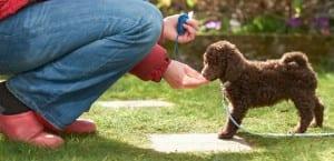 Hombre adiestrando a un perro con un clicker.