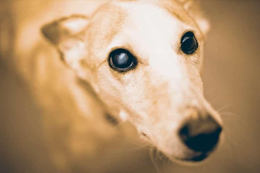 Como-evitar-la-ansiedad-en-mi-perro-2