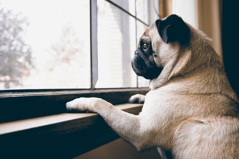 Como-evitar-la-ansiedad-en-mi-perro-4