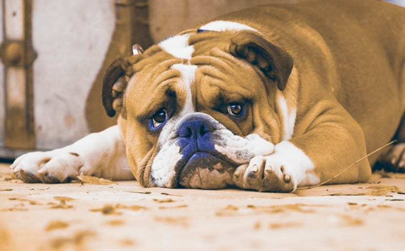 Como-evitar-la-ansiedad-en-mi-perro-5