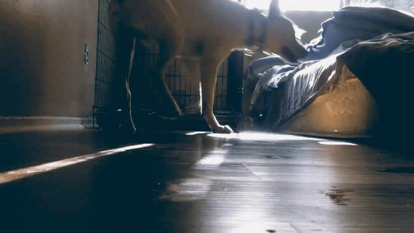 Como-evitar-la-ansiedad-en-mi-perro-6
