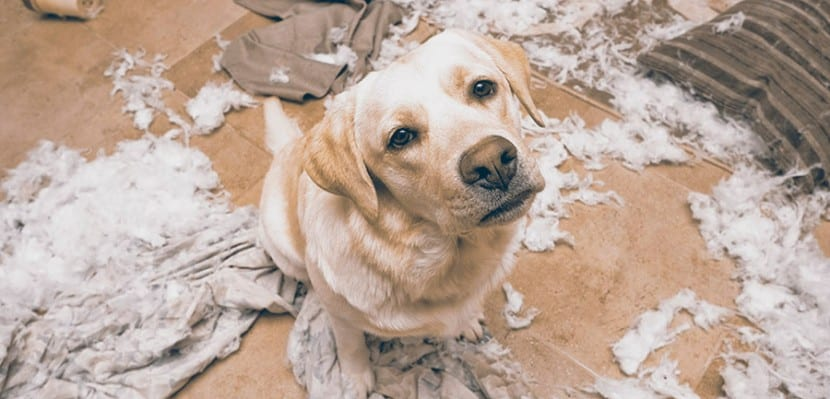 Como-evitar-la-ansiedad-en-mi-perro-7