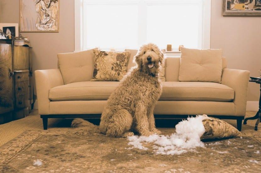 Como-evitar-la-ansiedad-en-mi-perro