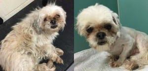 El antes y el después de un perro al que Mark Imhof ha cortado el pelo.