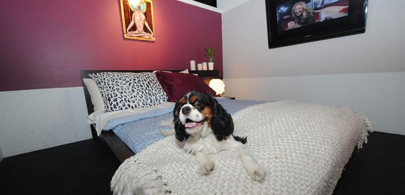 Alojamiento con perros en Semana Santa