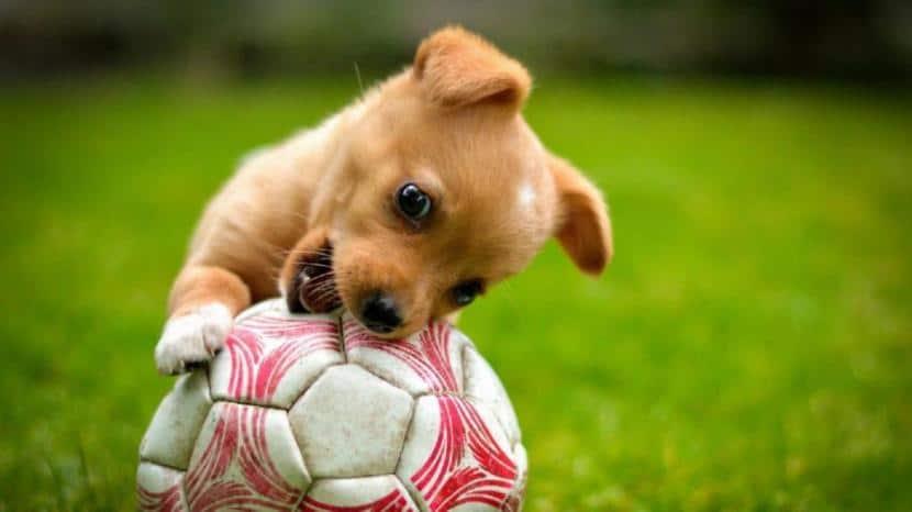 Cachorro mordiendo una pelota