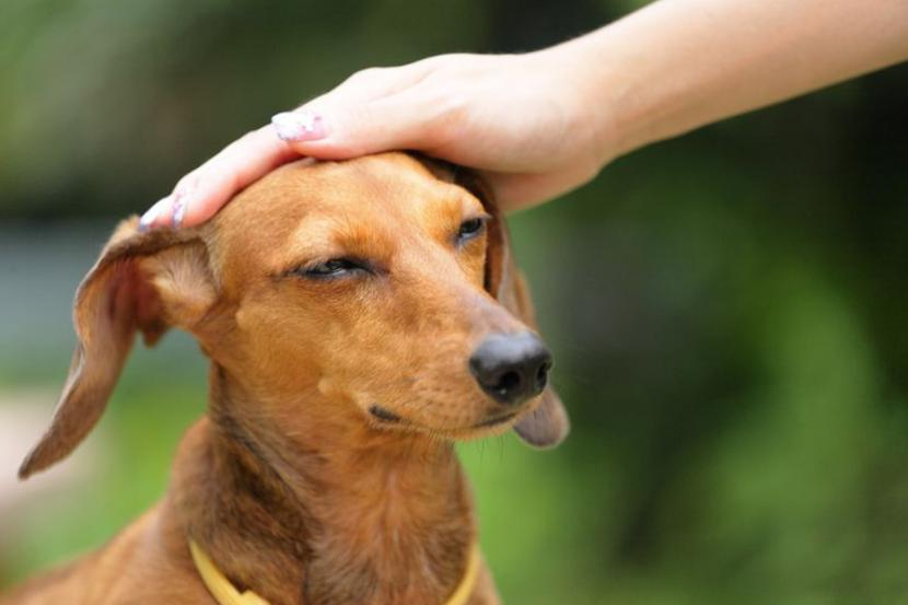 Cómo regañar a mi perro