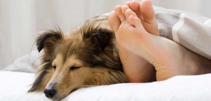 Ventajas y desventajas de dormir con el perro