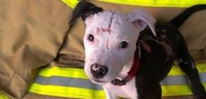Jake el perro rescatado de un incendio