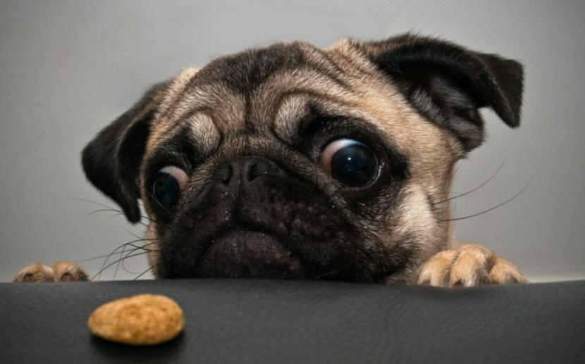 Perro no quiere comer