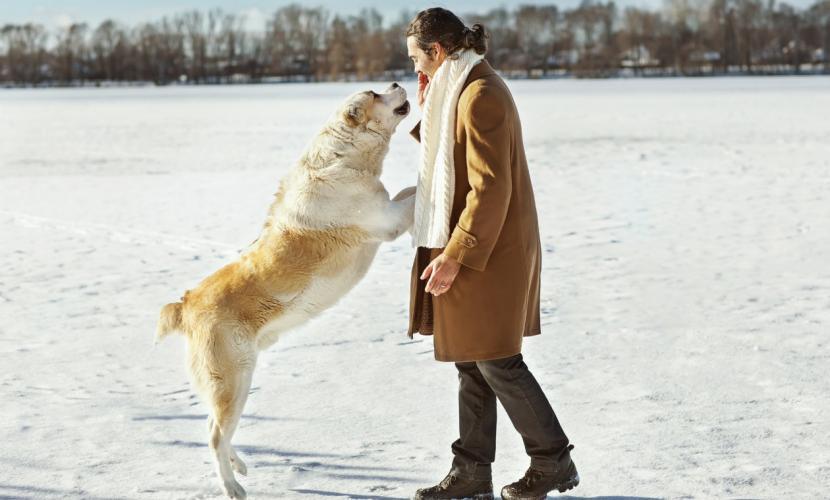 Cómo evitar que mi perro salte sobre la gente