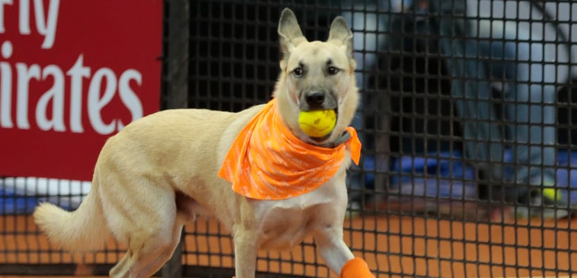 Perros sin hogar Open Brasil