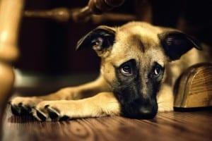 Cómo regañar a un perro