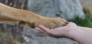 Perro dando la pata a una persona.