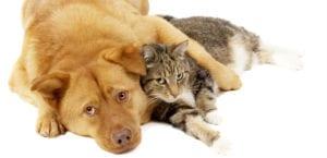 Perro y gato tumbados.