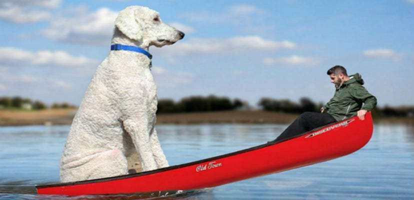 Fotomontaje de Christopher Cline con su perro Juji.