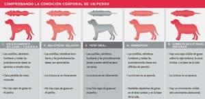 Ilustraciones que muestran perros de distinto peso.