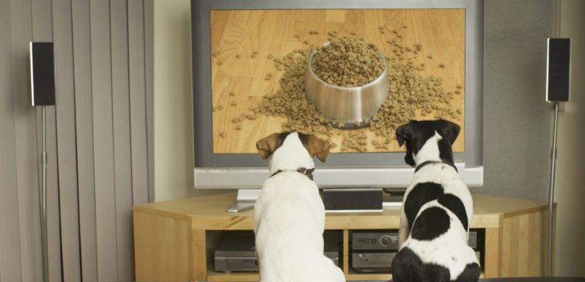 Perros viendo la televisión.