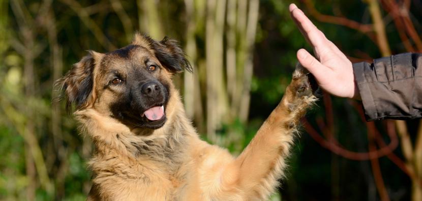 Adiestrar perro