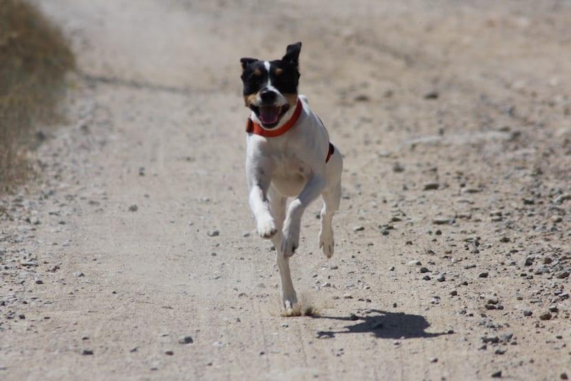 bodeguero andaluz corriendo
