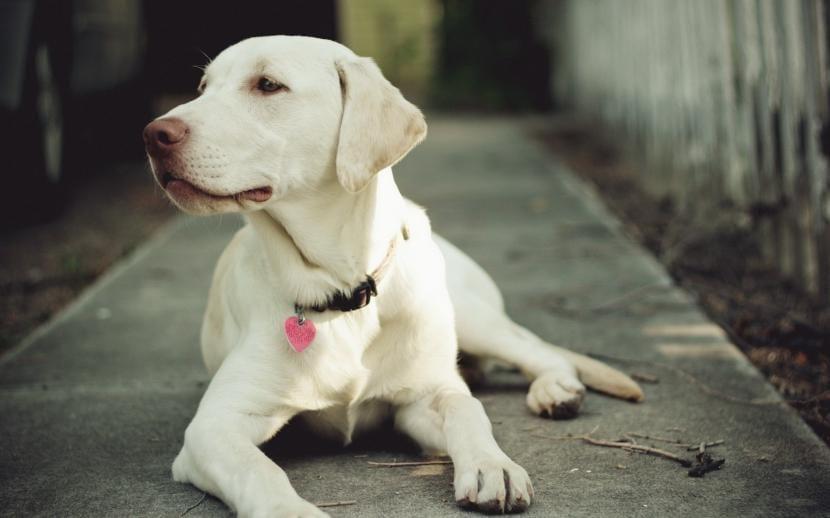 Desparasitar perro