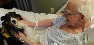 Hospital permite la visita de las mascotas
