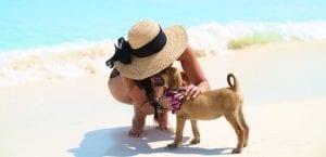 Isla adoptar perros