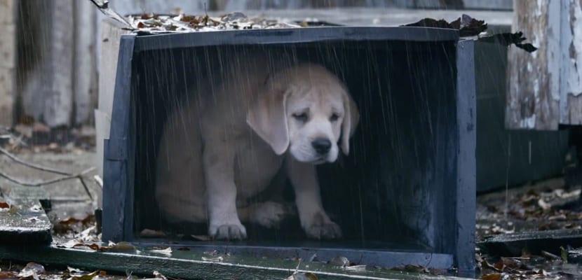 Qué hacer al encontrar un perro abandonado
