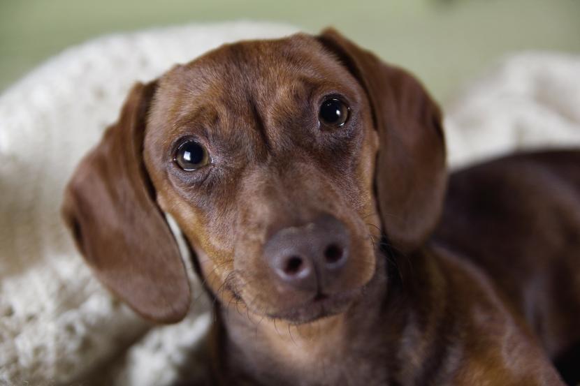 Perro con ojitos