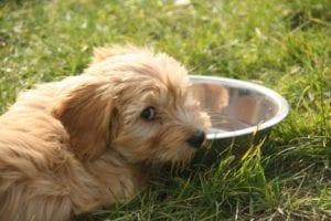 Perro no quiere agua