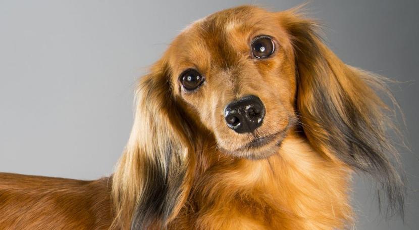 Perro pelo largo