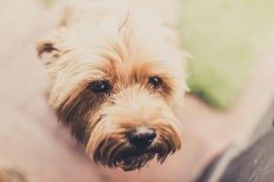 Perro sin parásitos