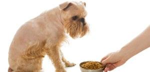 Perro frente a un plato de pienso..